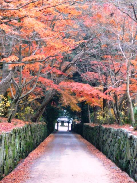 興聖寺・琴坂の紅葉 終わり近し 2006年12月16日 撮影:MKタクシー