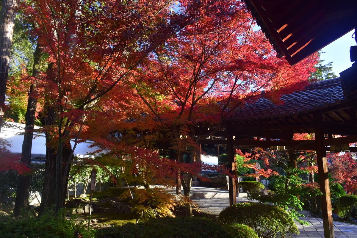 萬福寺の紅葉 見頃 2019年11月30日 撮影:MKタクシー