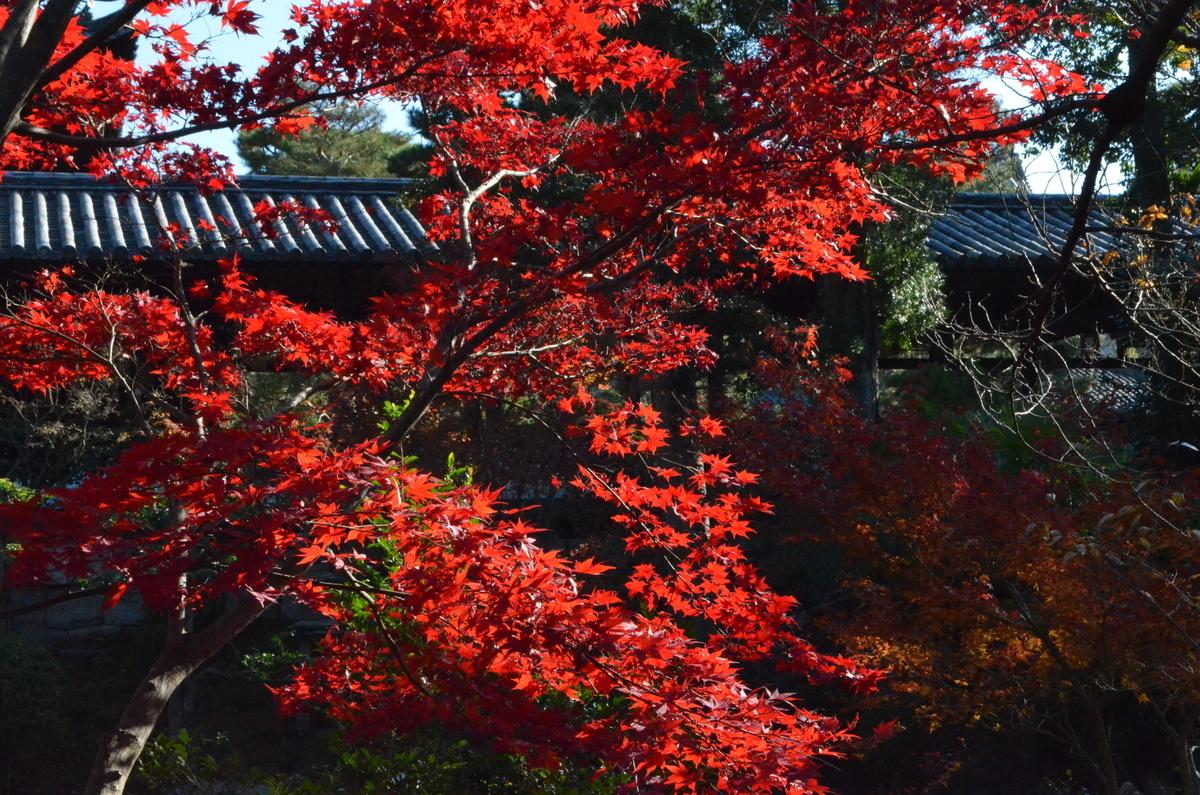 萬福寺の紅葉 見頃 2017年12月2日 撮影:MKタクシー