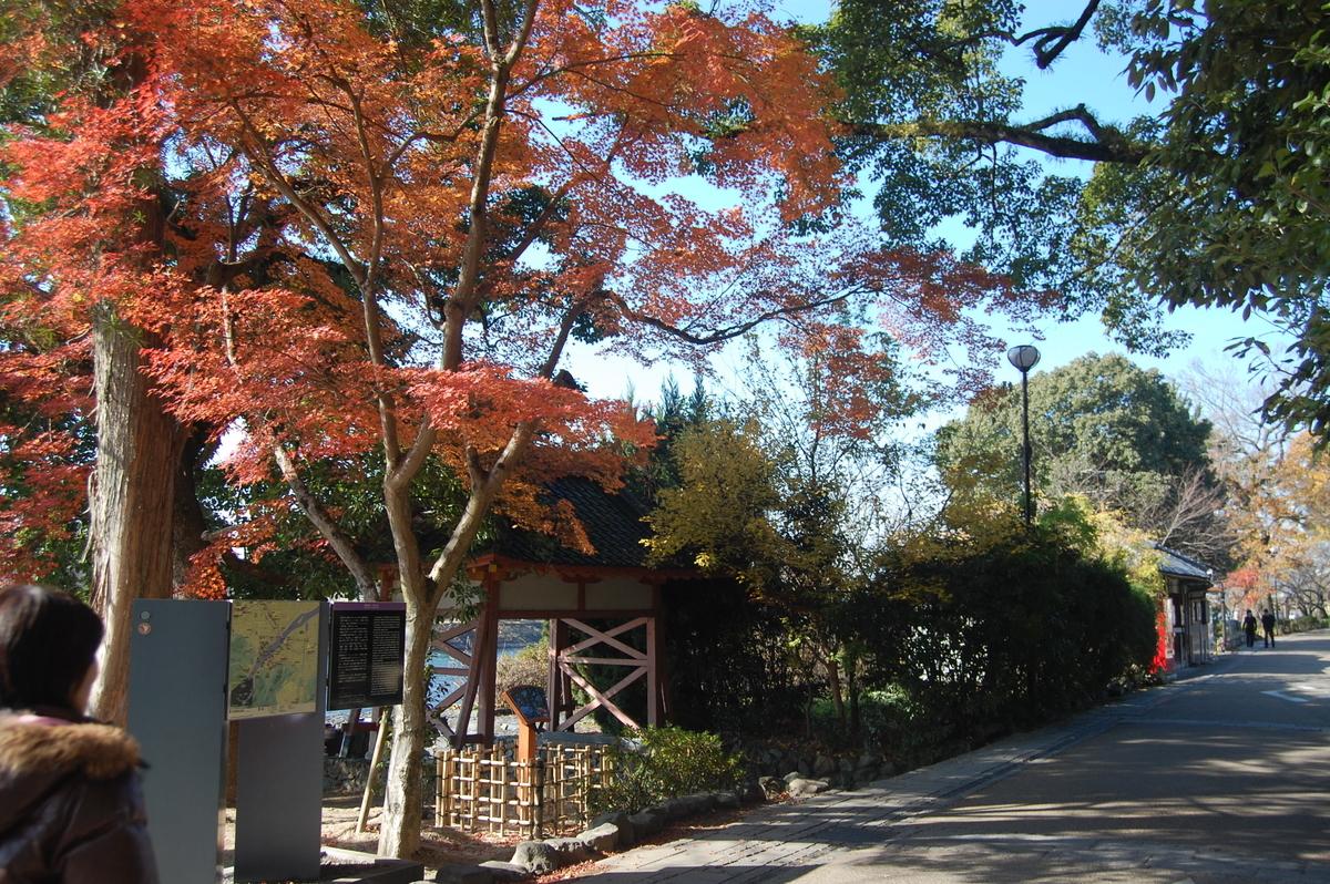朝霧通の紅葉 散りはじめ 2008年12月23日 撮影:MKタクシー