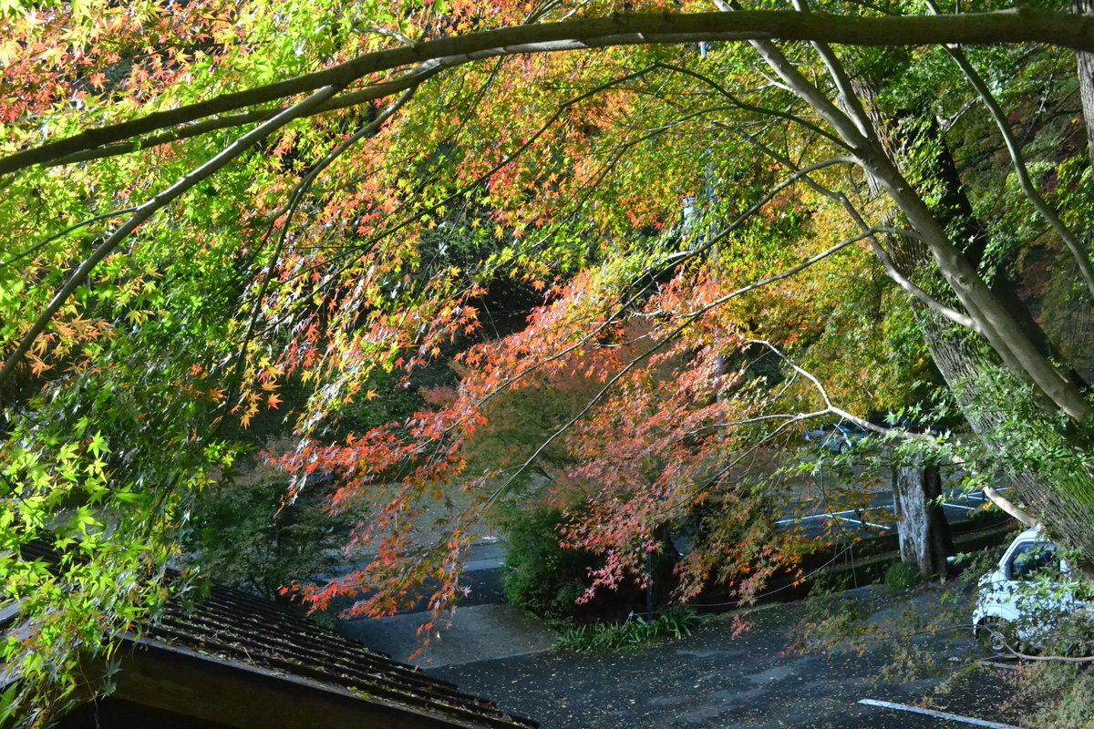 神応寺社の紅葉 色づきはじめ 2017年11月19日 撮影:MKタクシー