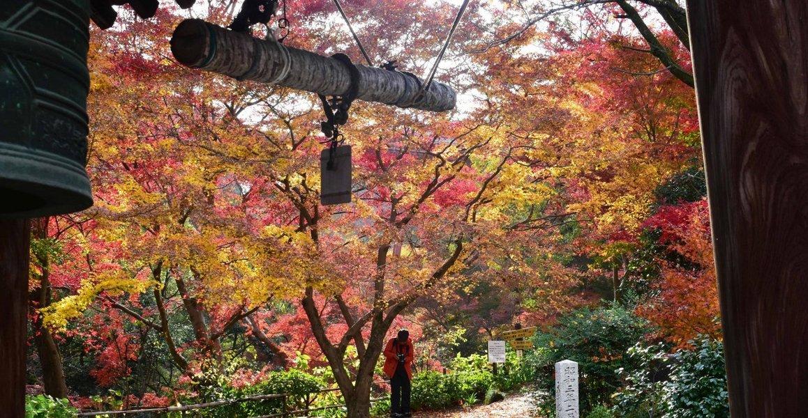 神応寺社・鐘楼の紅葉 見頃 2019年12月1日 撮影:MKタクシー
