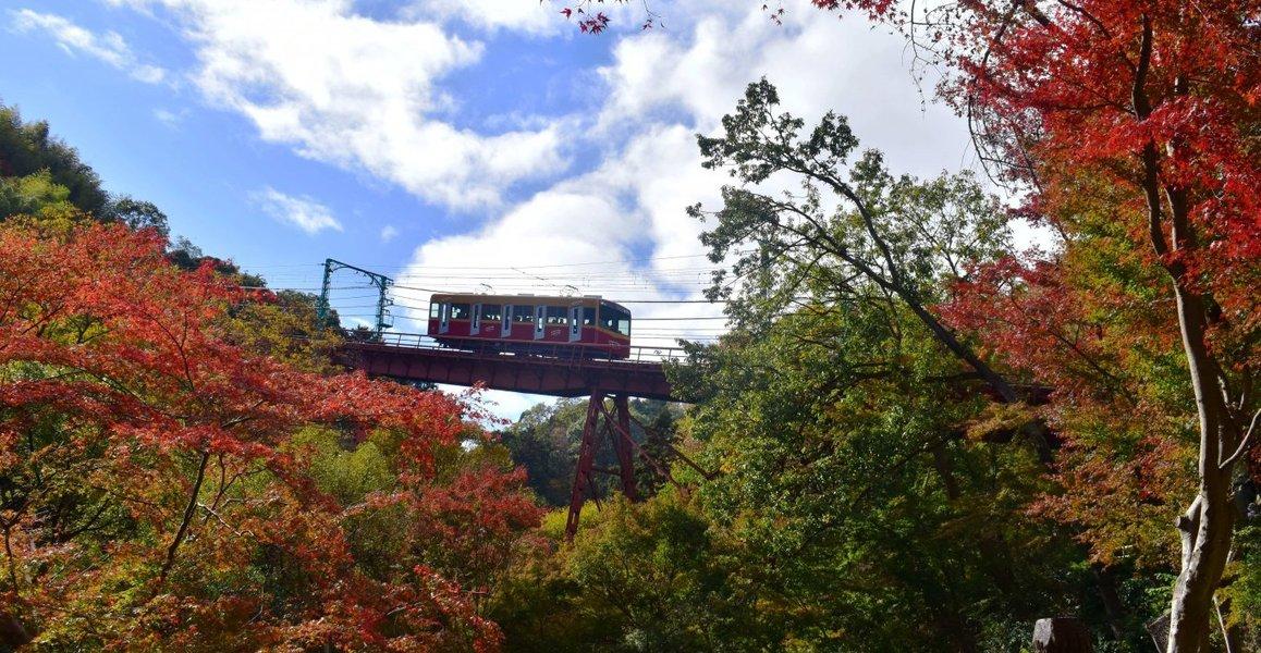 男山ケーブル・神応寺奥からの紅葉 見頃 2018年11月24日 撮影:MKタクシー