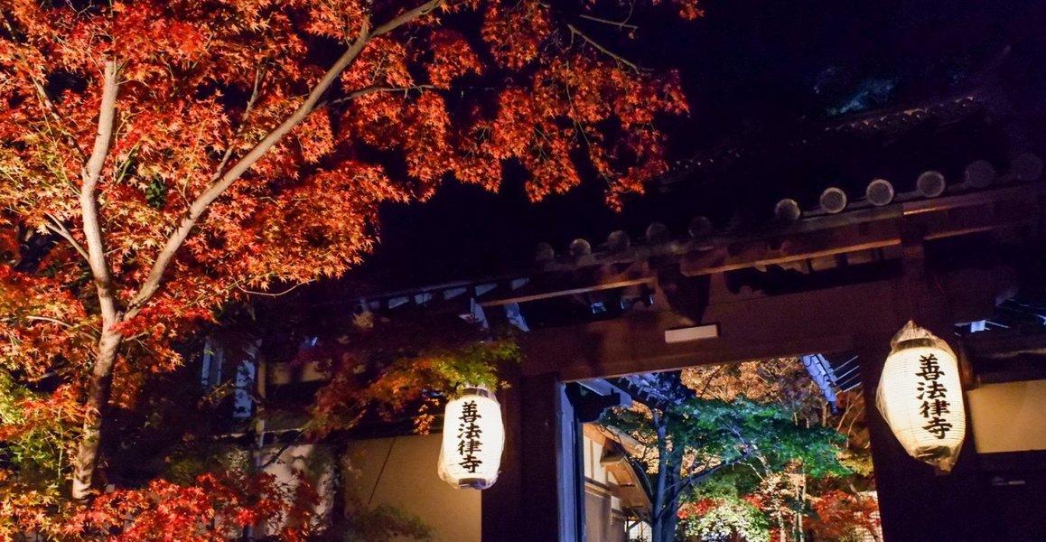 善法律寺の紅葉ライトアップ 見頃 2019年11月24日 撮影:MKタクシー