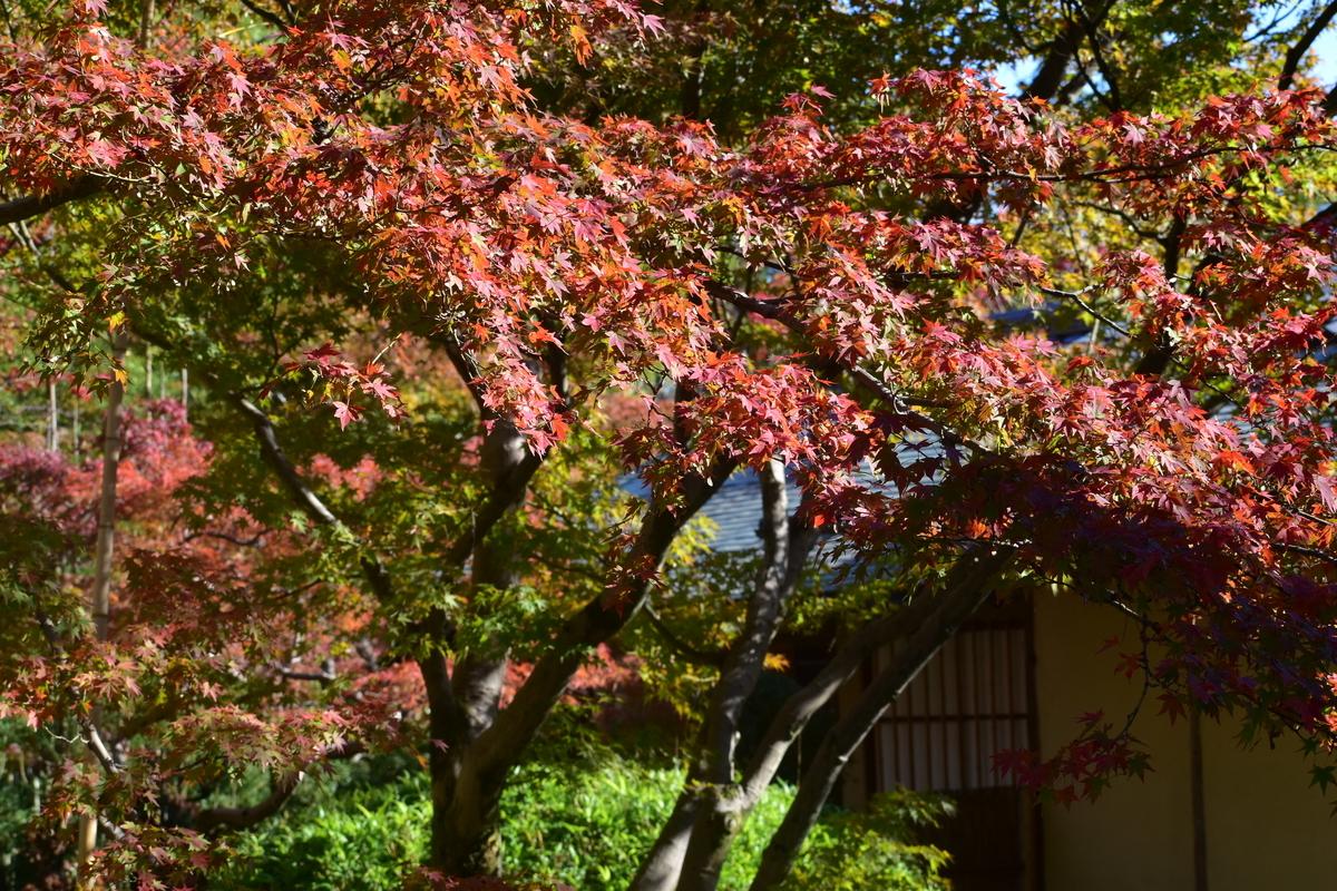 松花堂庭園・外園の紅葉 見頃 2018年11月24日 撮影:MKタクシー