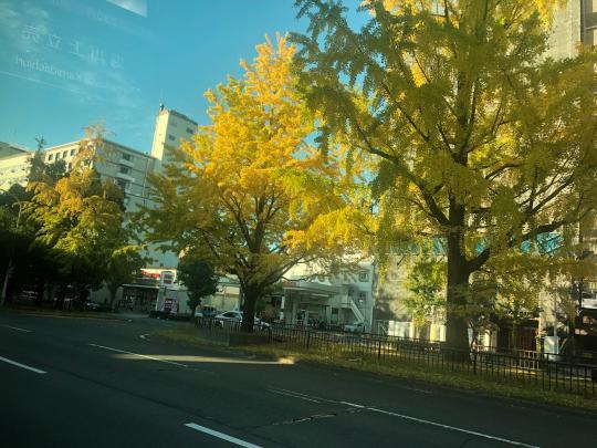 堀川寺之内のイチョウ 見頃 2019年11月5日 撮影:MKタクシー