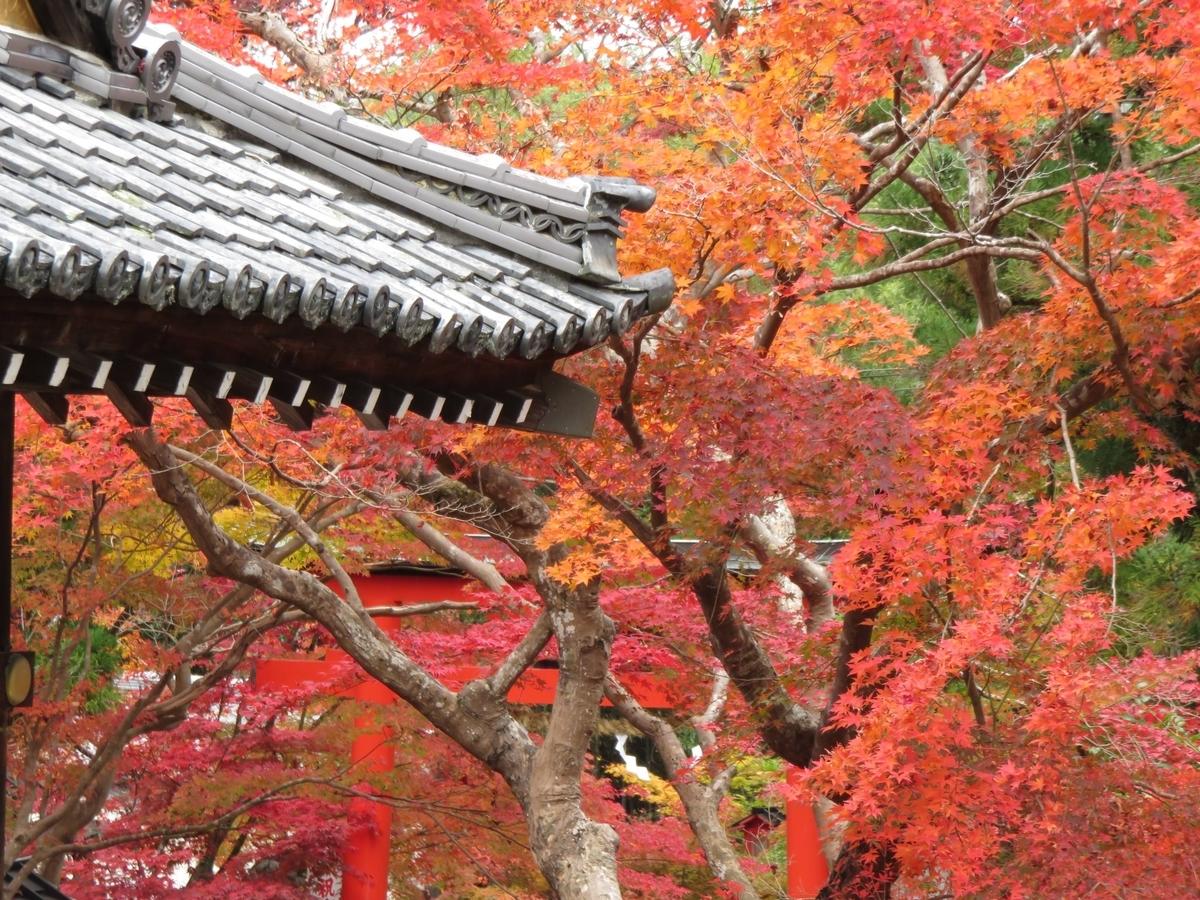 鍬山神社の紅葉 見頃 2020年11月9日 撮影:MKタクシー