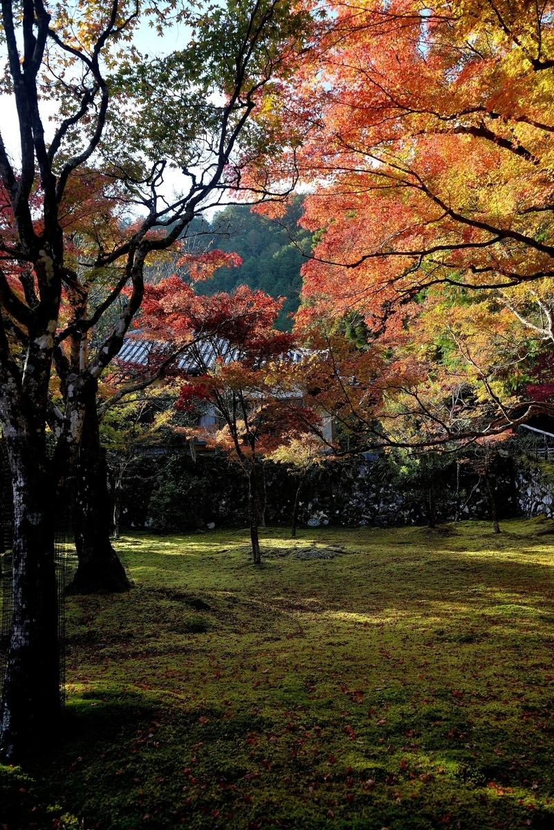 神護寺の紅葉 見頃 2020年11月9日 撮影:MKタクシー