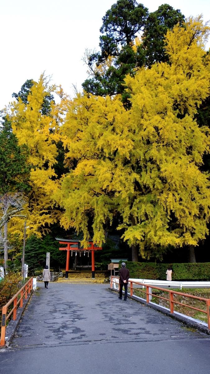 岩戸落葉神社の黄葉 見頃 2020年11月11日 撮影:MKタクシー