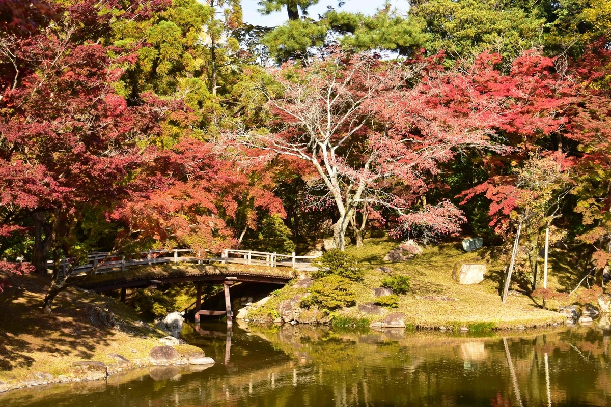 京都仙洞御所・紅葉橋の紅葉 見頃 2020年11月12日 撮影:MKタクシー