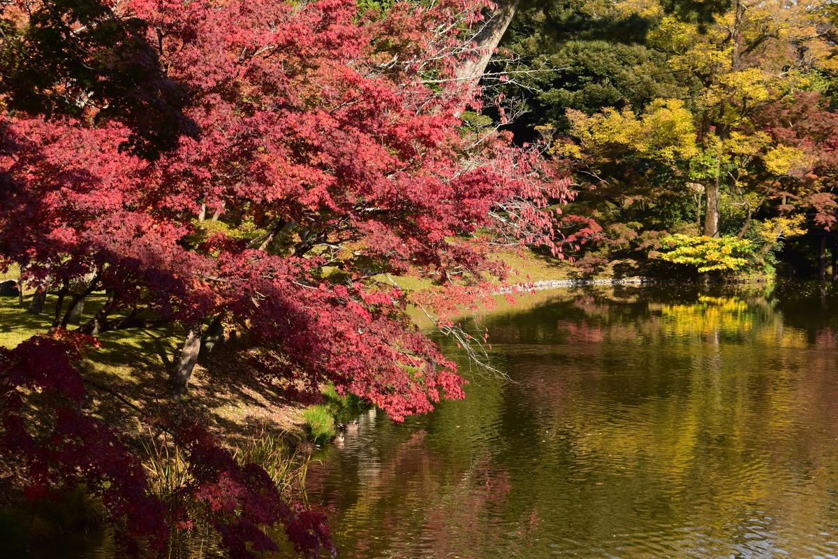 京都仙洞御所・北池の紅葉 見頃 2020年11月12日 撮影:MKタクシー