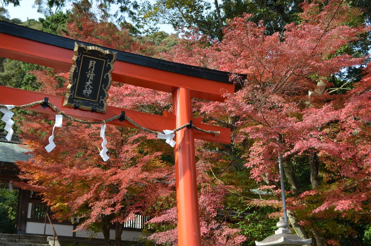 月読神社の紅葉 見頃 2017年11月25日 撮影:MKタクシー