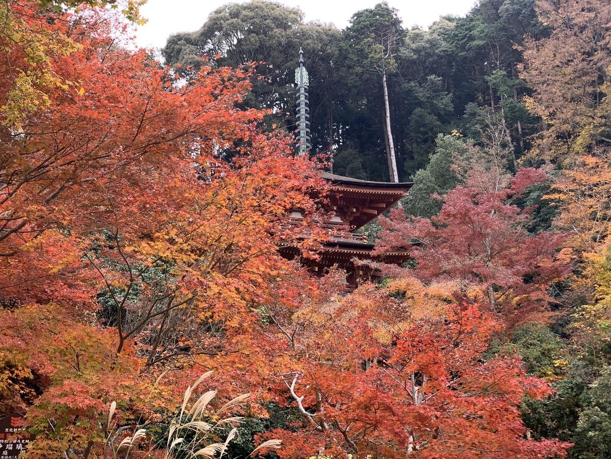 浄瑠璃寺の紅葉 見頃 2019年11月24日 撮影:MKタクシー