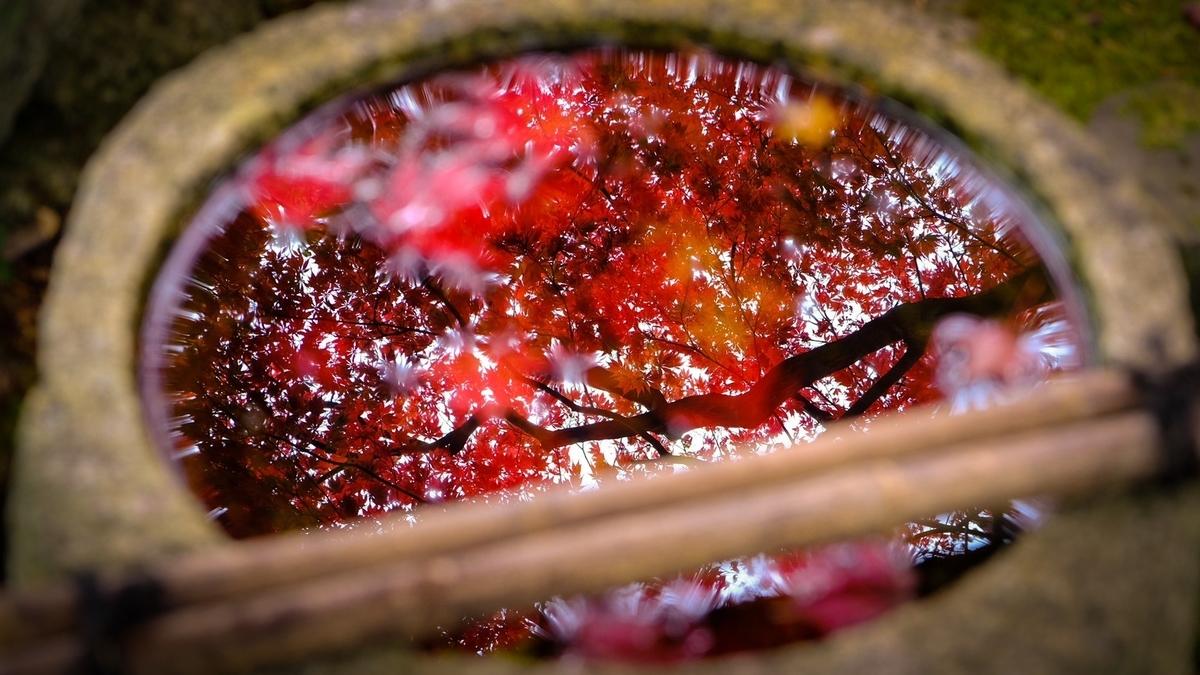 苗秀寺の手水鉢に移りこんだ紅葉 2019年11月9日 撮影:MKタクシー