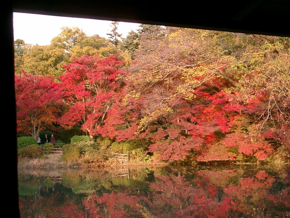 宝ヶ池公園の紅葉 2005年11月22日 見頃 撮影:MKタクシー