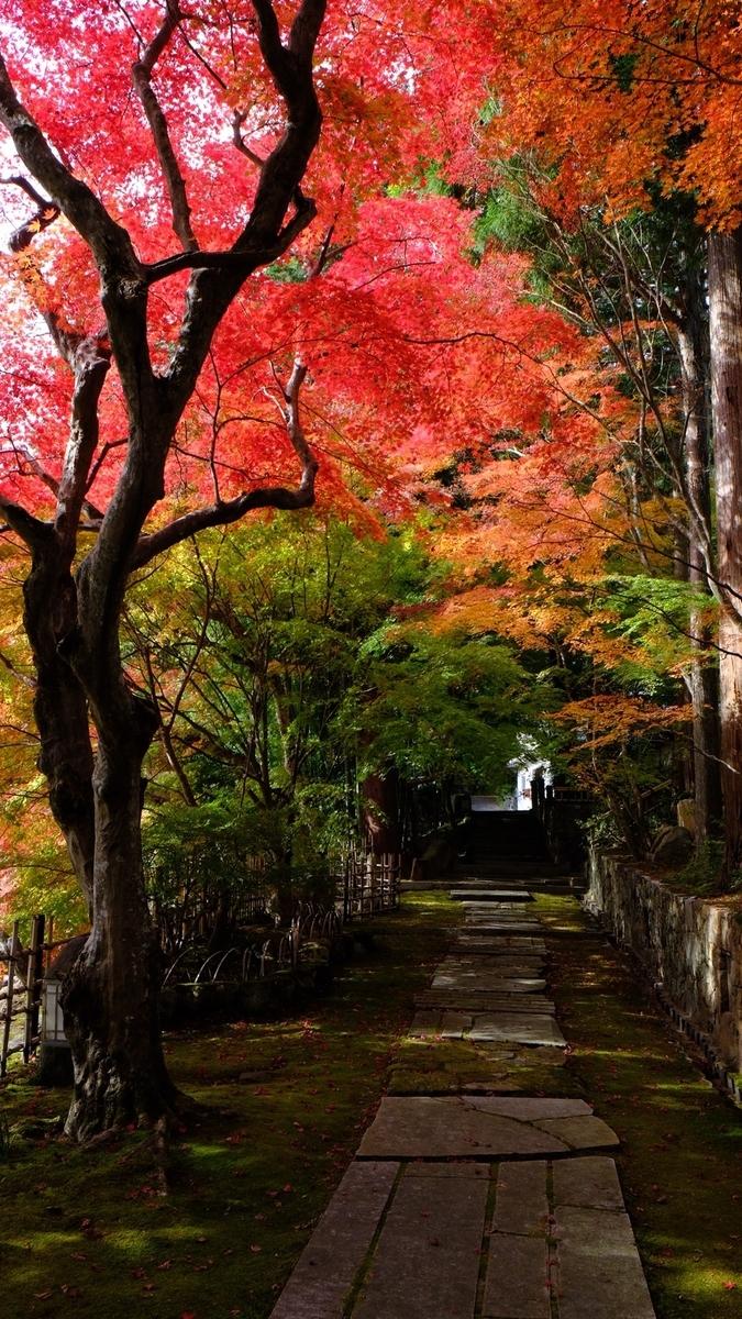 苗秀寺の紅葉 見頃 2020年11月12日 撮影:MKタクシー