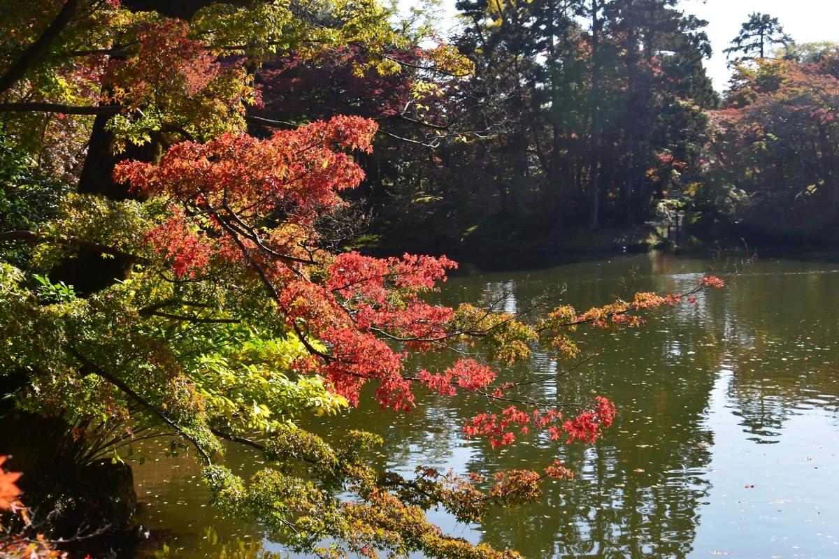 仙洞御所・北池の紅葉 見頃 2020年11月12日 撮影:MKタクシー