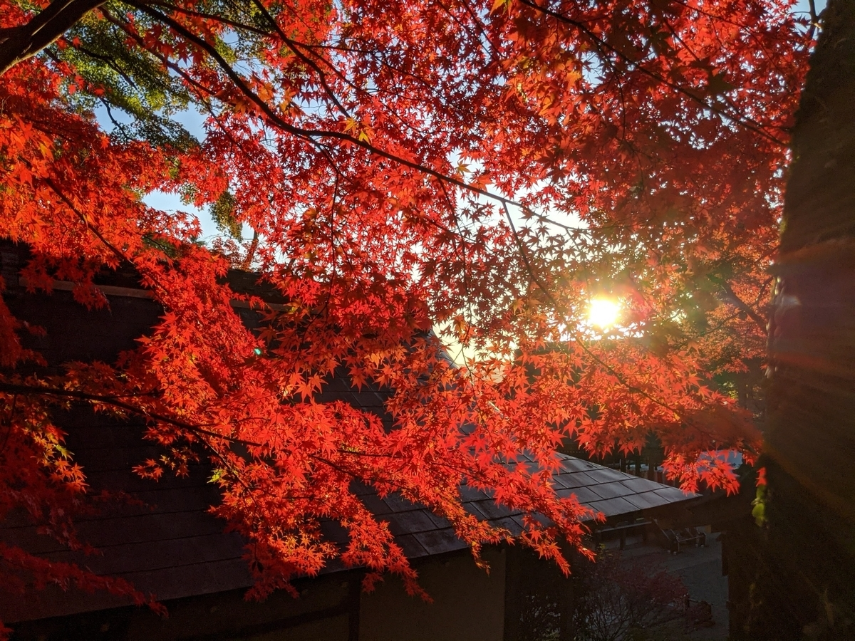 出雲大神宮の紅葉 見頃 2020年11月14日 撮影:MKタクシー