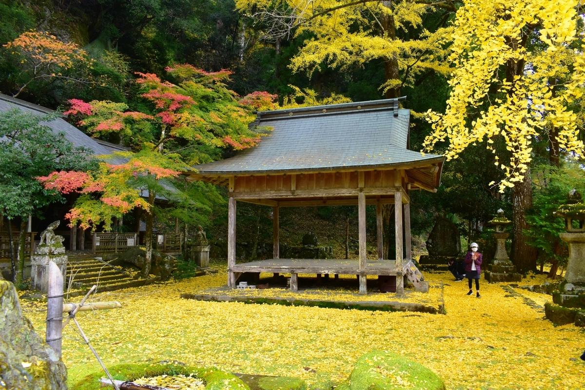 岩戸落葉神社のイチョウ 見頃 2020年11月15日 撮影:MKタクシー