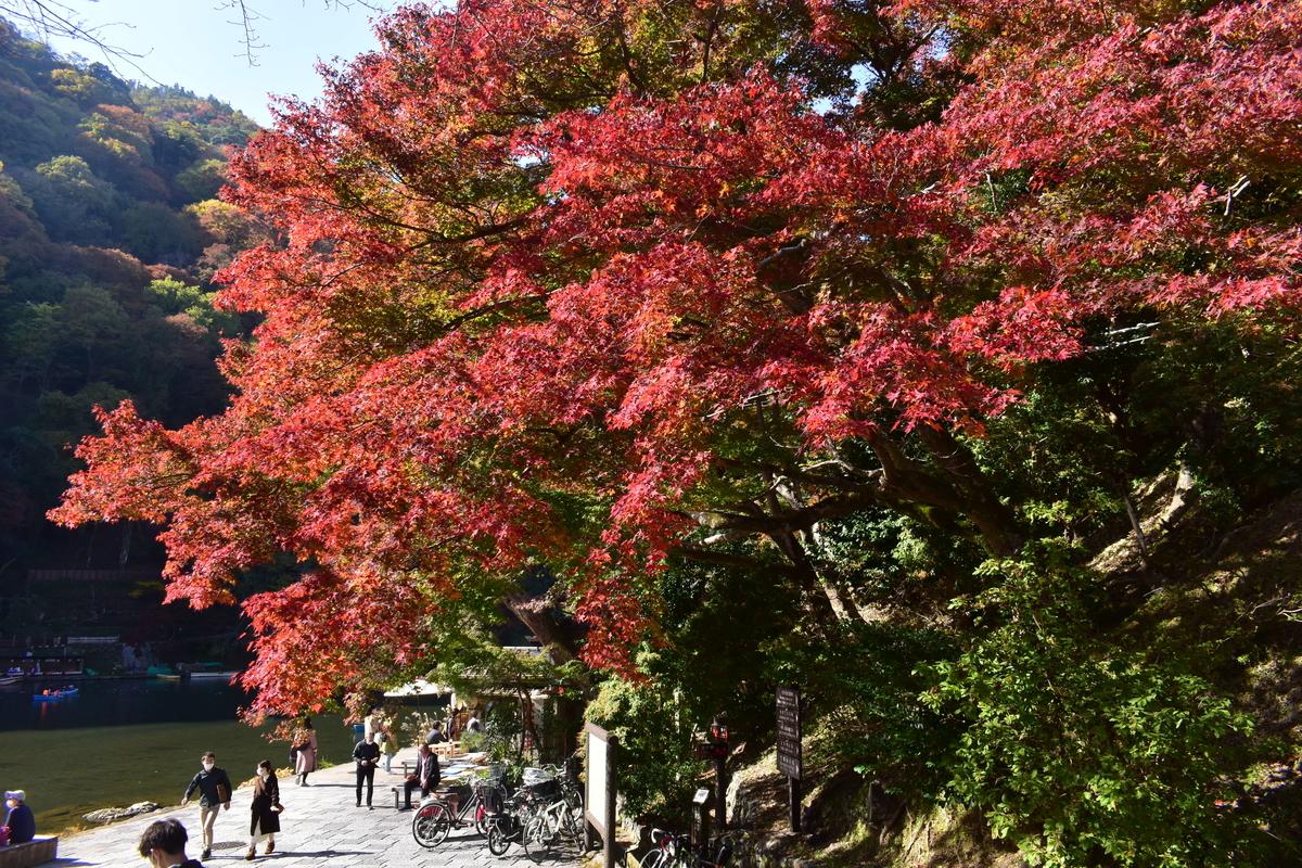 亀山公園の紅葉 見頃 2020年11月15日 撮影:MKタクシー