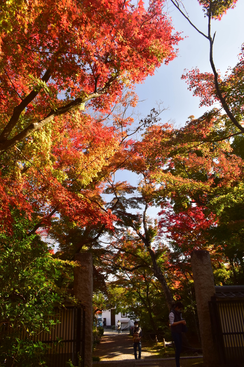 浄住寺の紅葉 色づきはじめ 2020年11月15日 撮影:MKタクシー