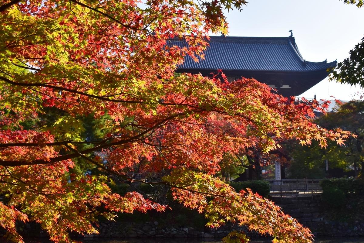 萬福寺の紅葉 見頃 2020年11月14日 撮影:MKタクシー