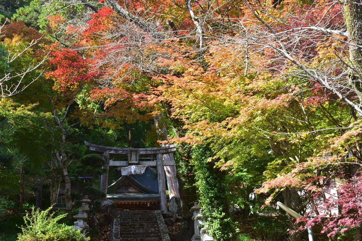 奥山田天神社の紅葉 見頃 2019年11月17日 撮影:MKタクシー