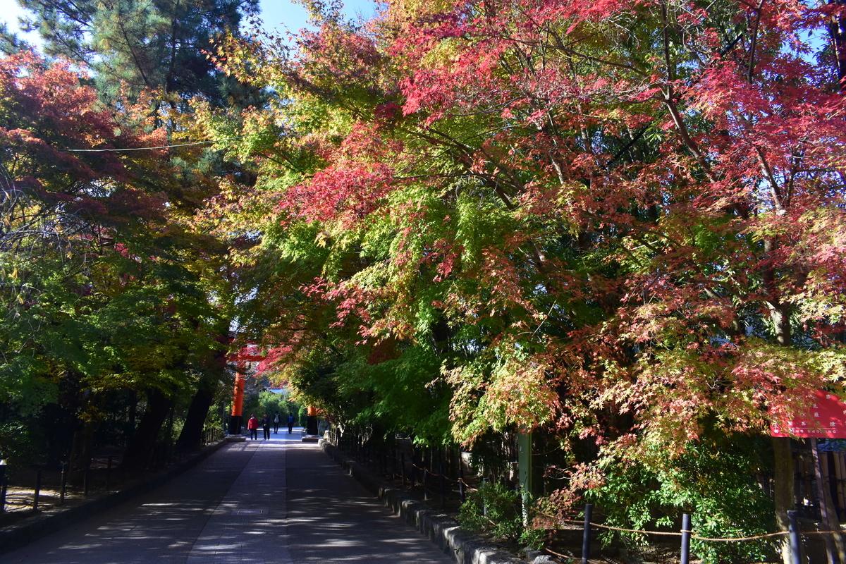 宇治上神社・鳥居前の紅葉 色づきはじめ 2020年11月14日 撮影:MKタクシー