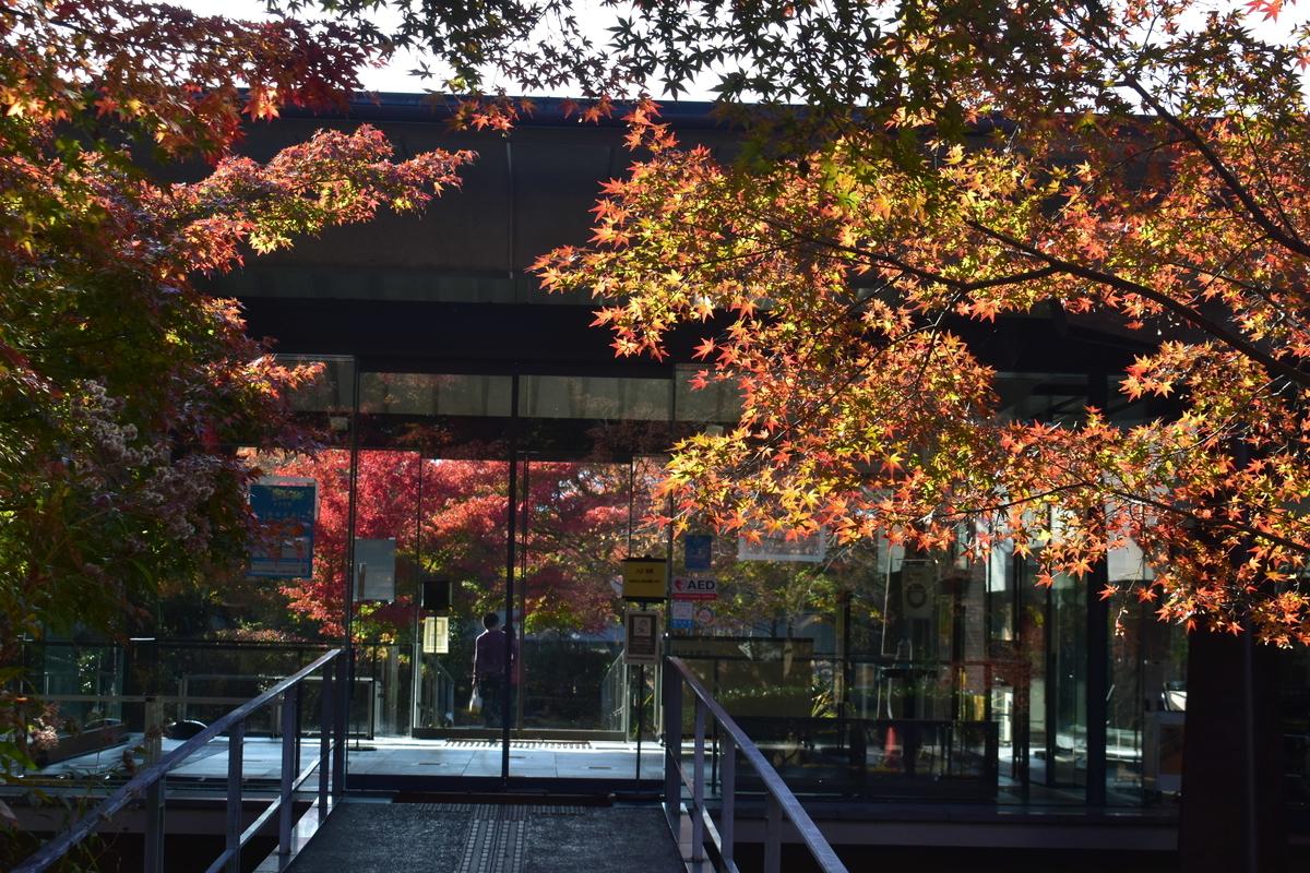 宇治上神社・源氏物語ミュージアムの紅葉 色づきはじめ 2020年11月14日 撮影:MKタクシー