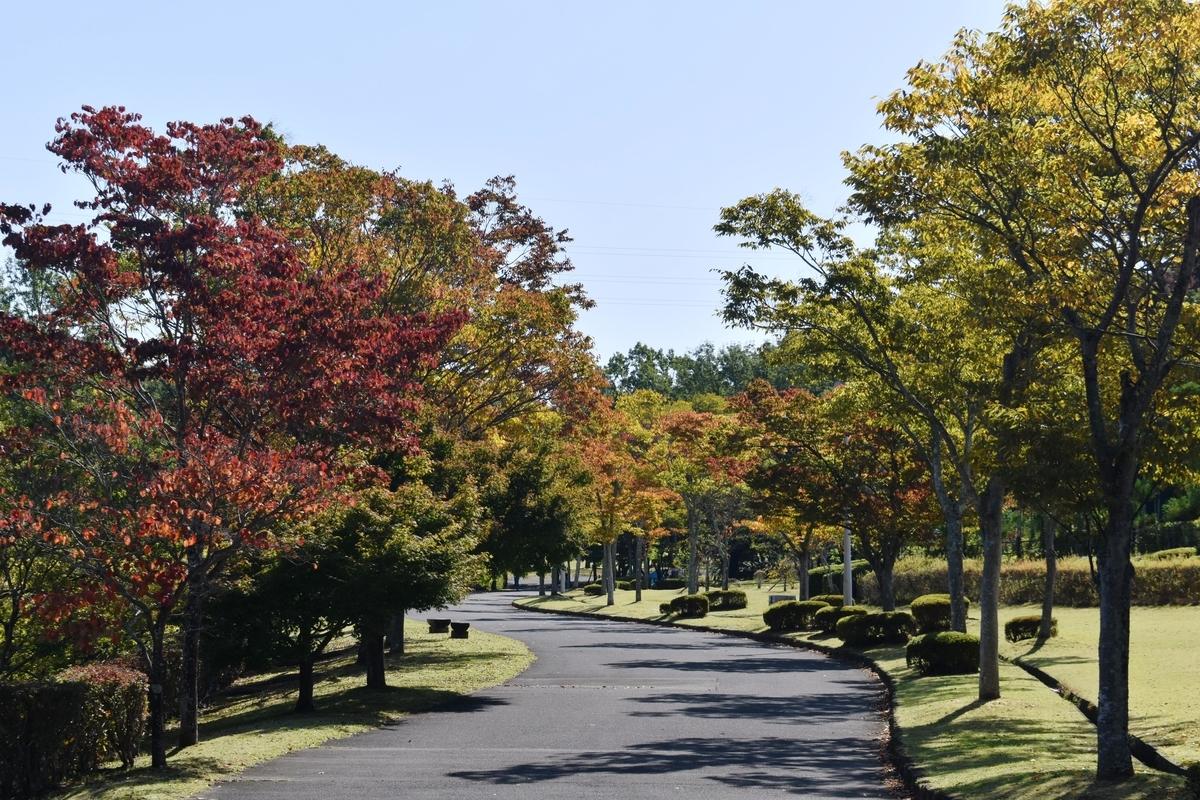 太陽が丘公園・ケヤキの紅葉 色づきはじめ 2020年10月24日 撮影:MKタクシー