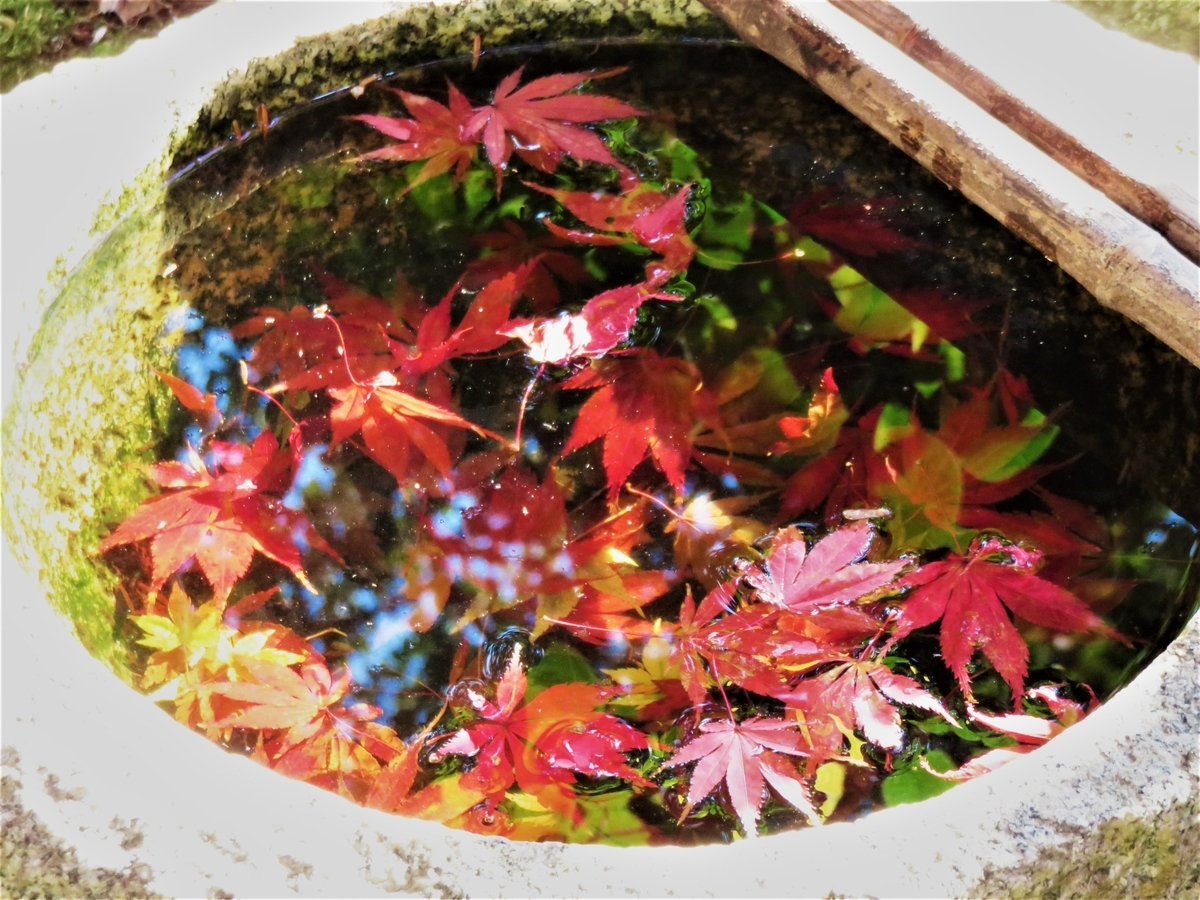 苗秀寺の手水鉢に移りこんだ紅葉 2020年11月16日 撮影:MKタクシー