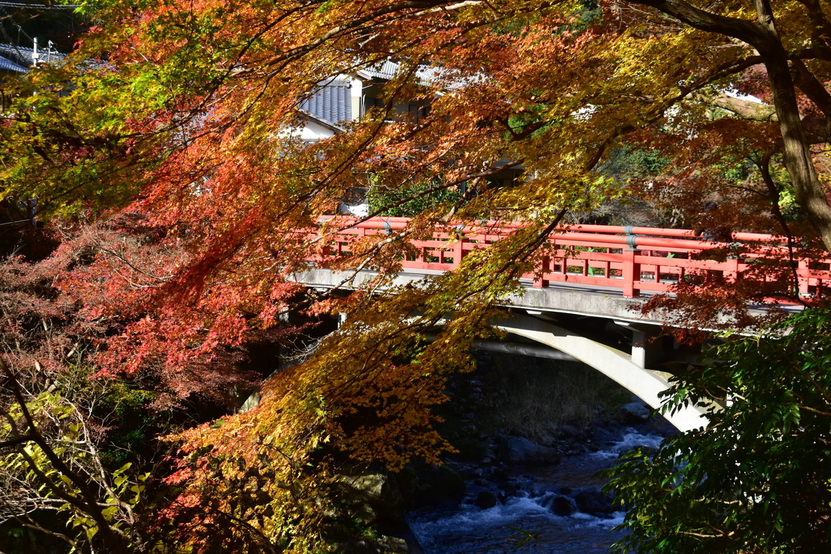 清滝・渡猿橋と紅葉 見頃 2020年11月15日 撮影:MKタクシー
