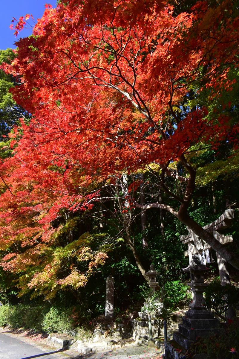大道神社の紅葉 見頃 2020年11月14日 撮影:MKタクシー