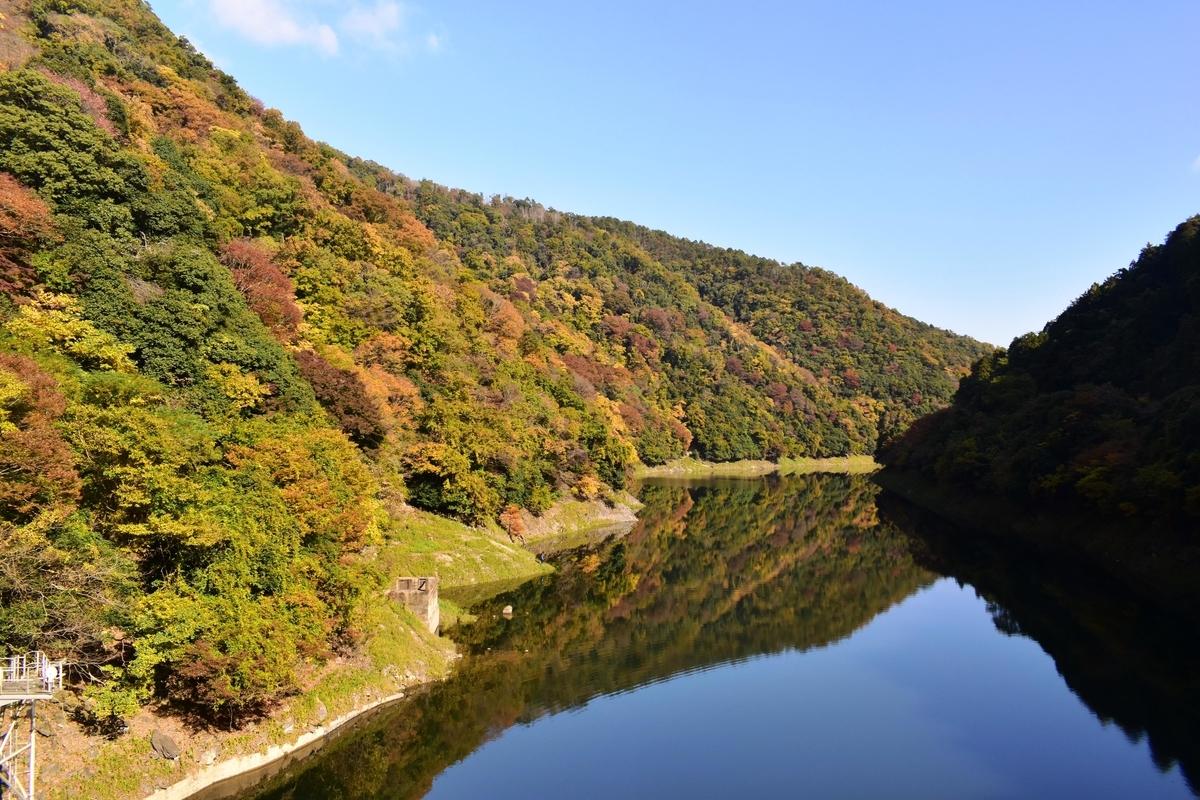 天ヶ瀬ダム湖・大峰橋からの紅葉 見頃近し 2020年11月14日 撮影:MKタクシー