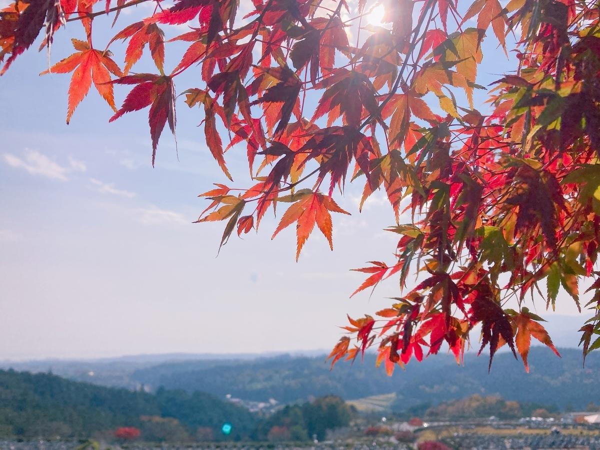 比叡山の紅葉 見頃 2020年11月16日 撮影:MKタクシー