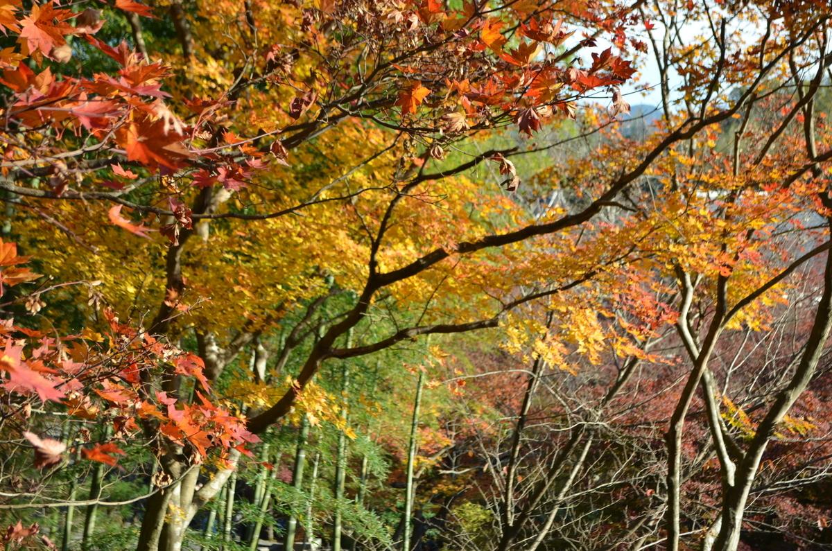 8:05 天龍寺の早朝参拝 百花苑 2017年11月25日 撮影:MKタクシー