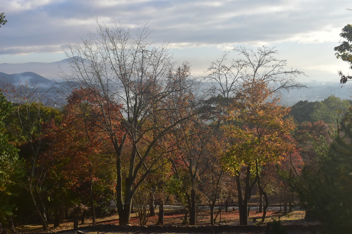 朝もやの京都盆地 2018年11月15日 撮影:MKタクシー
