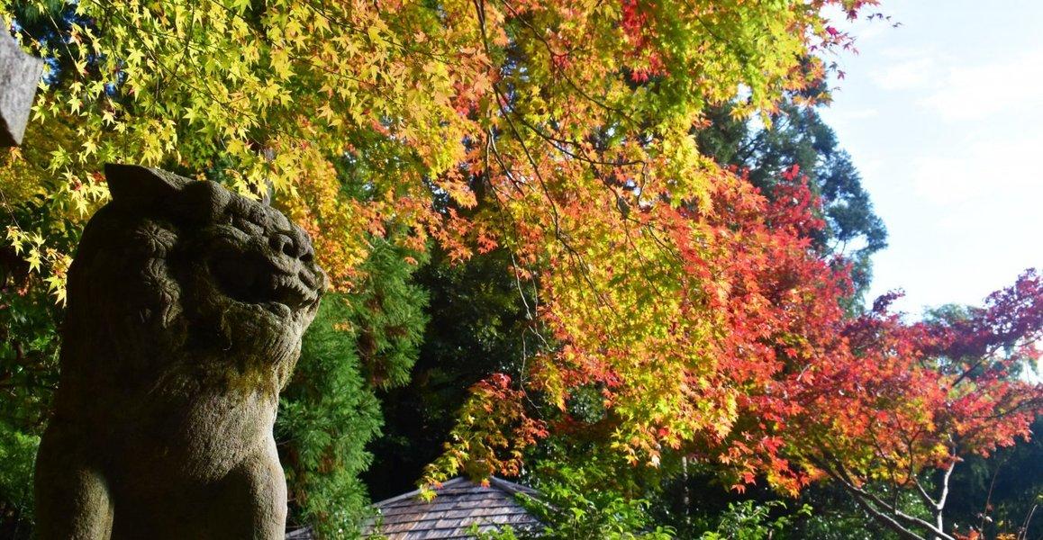 護法堂弁財天の紅葉と狛犬 2018年11月17日 撮影:MKタクシー