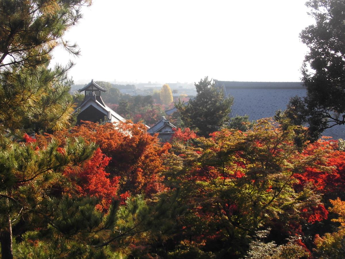 望京の丘 天龍寺の早朝参拝 2016年11月13日 撮影:MKタクシー