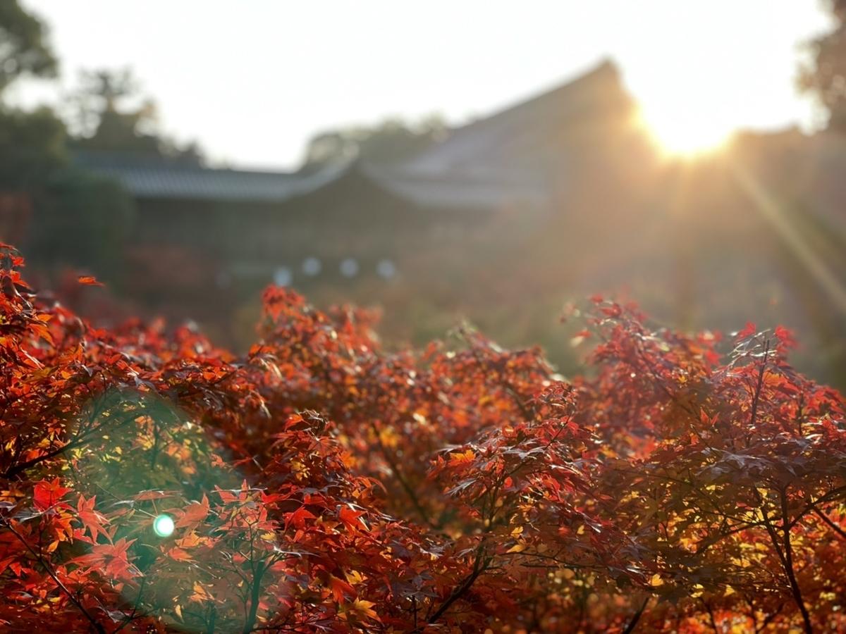 2020年11月18日 臥雲橋より通天橋 見頃 撮影:MKタクシー