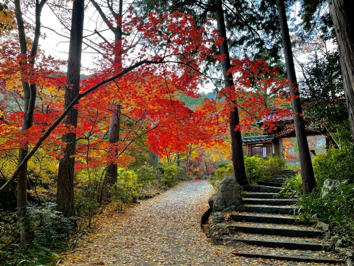 神蔵寺の紅葉 見頃 2020年11月18日 撮影:MKタクシー