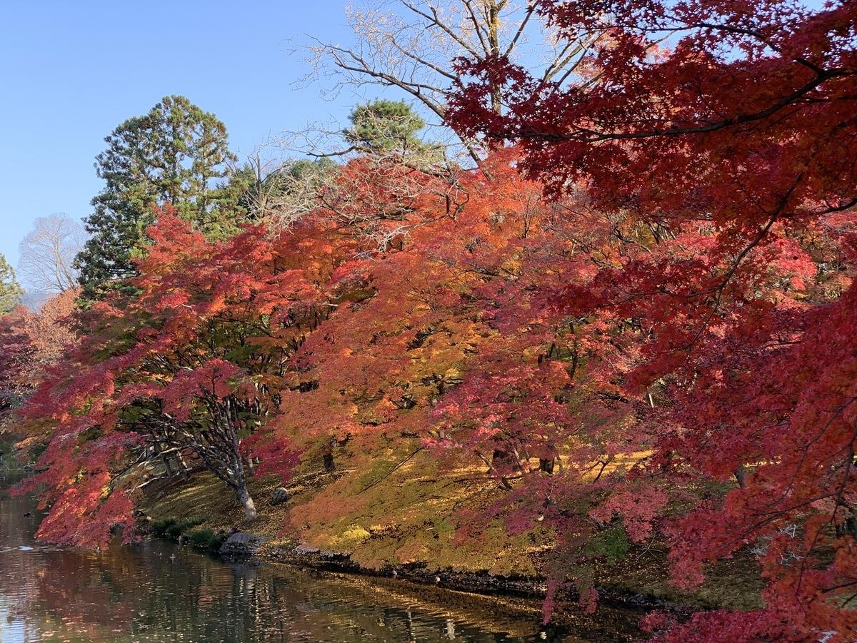 京都仙洞御所・北池の紅葉 見頃 2020年11月18日 撮影:MKタクシー