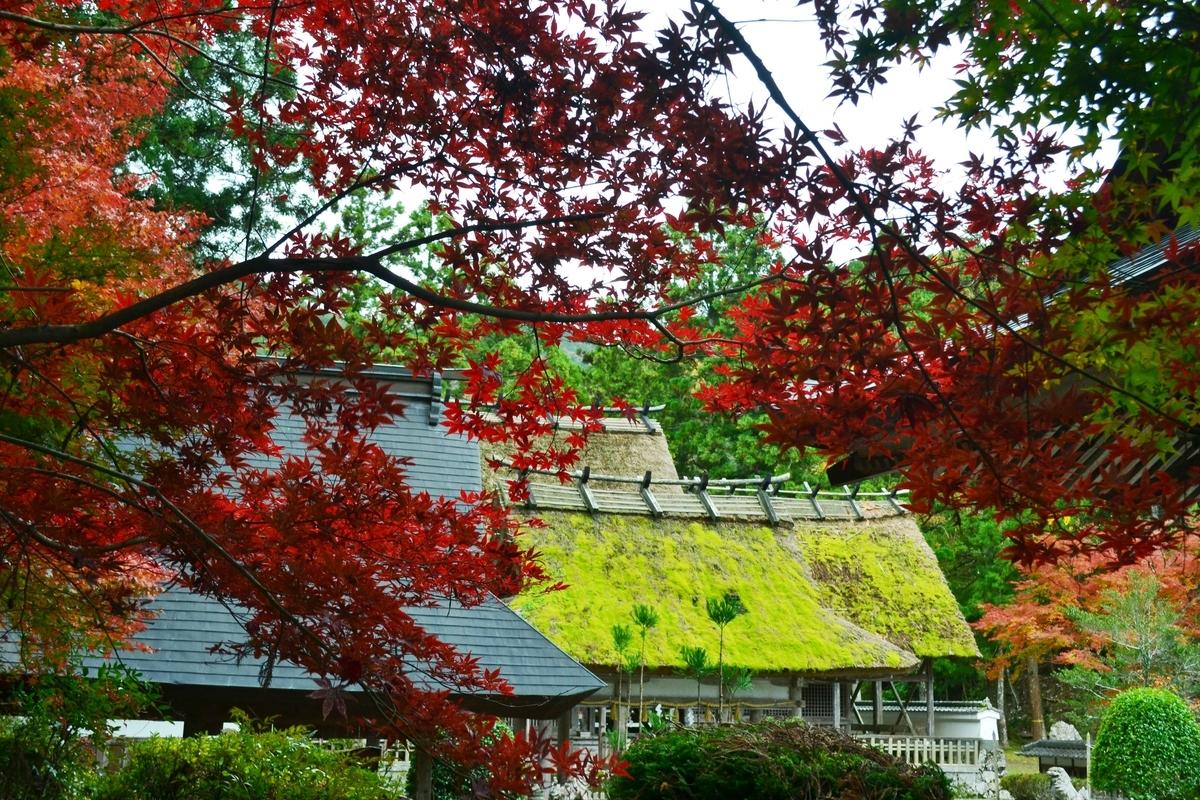 摩気神社(園部)の紅葉 見頃 2017年11月12日 撮影:MKタクシー
