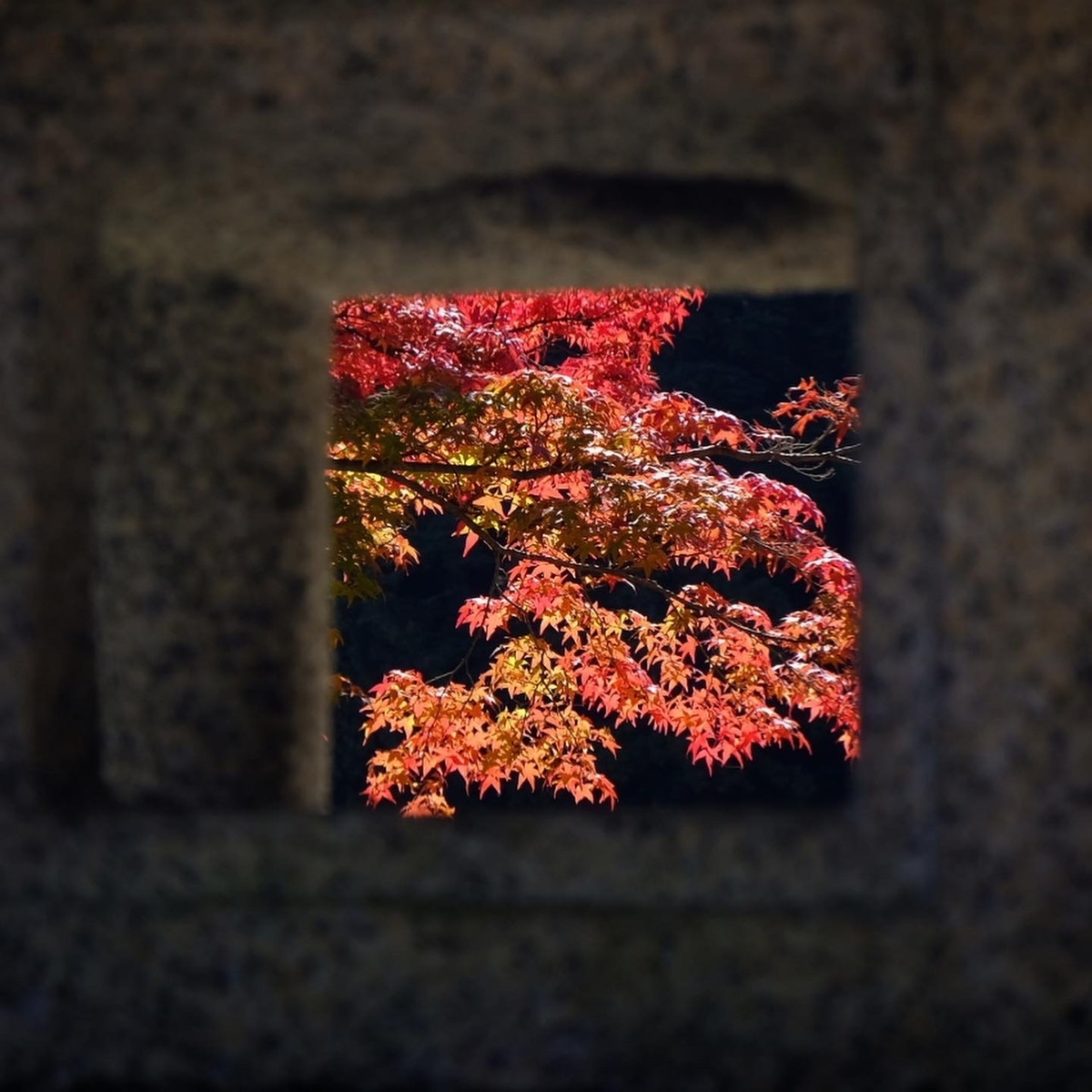 善峯寺の紅葉 見頃近し 2020年11月9日 撮影:MKタクシー