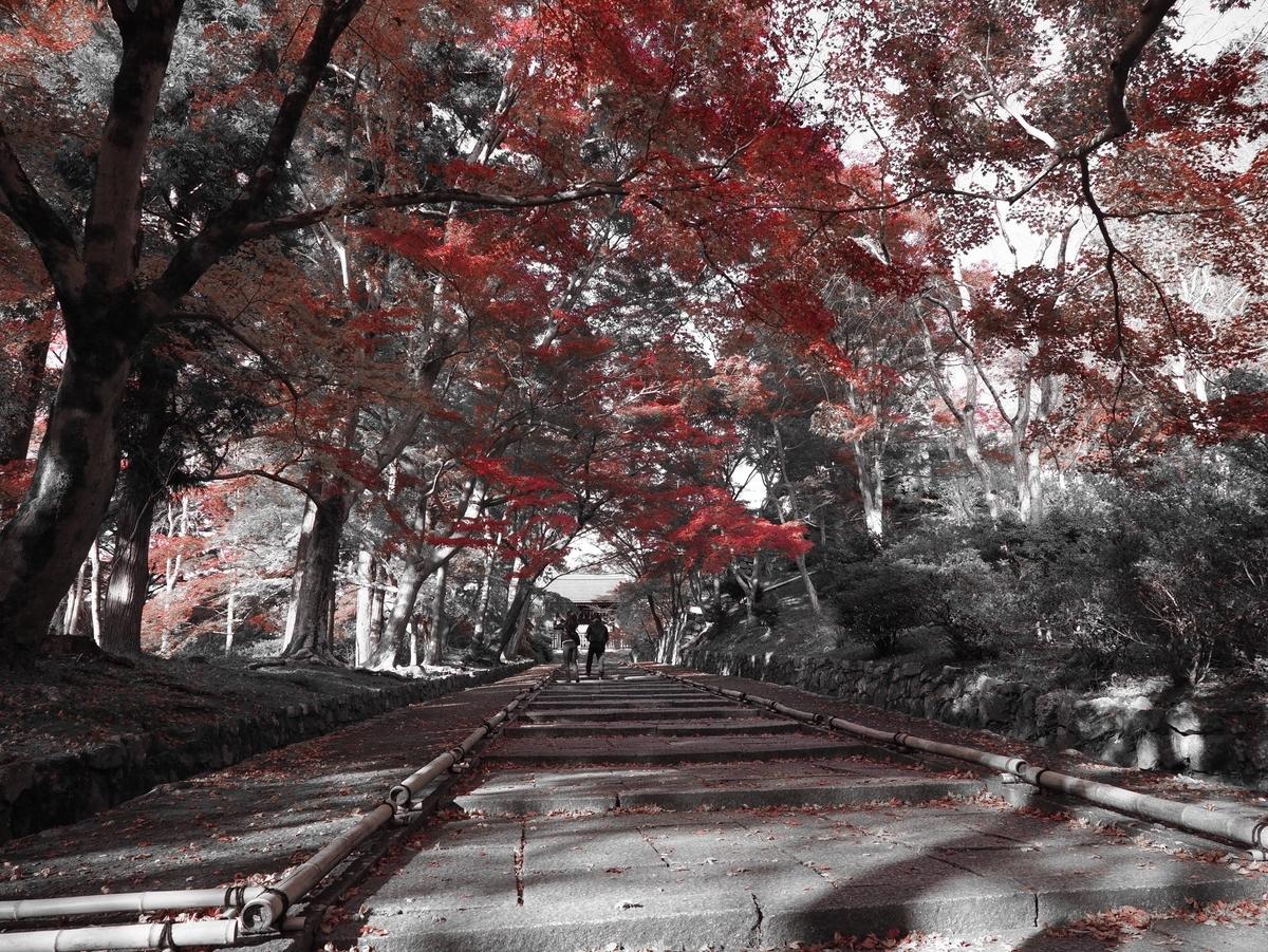 毘沙門堂の紅葉(赤以外の色を取り除いています) 見頃 2020年11月17日 撮影:MKタクシー