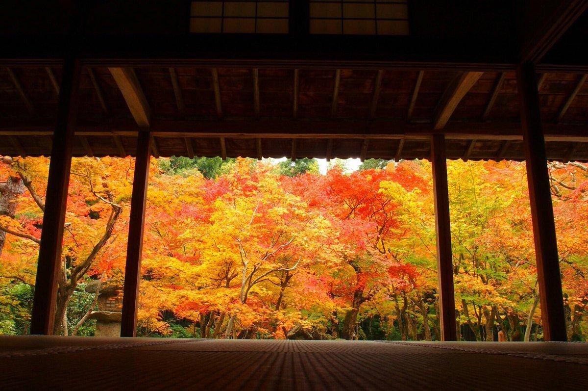 圓光寺・十牛の庭の紅葉 見頃 2016年11月13日 撮影:MKタクシー