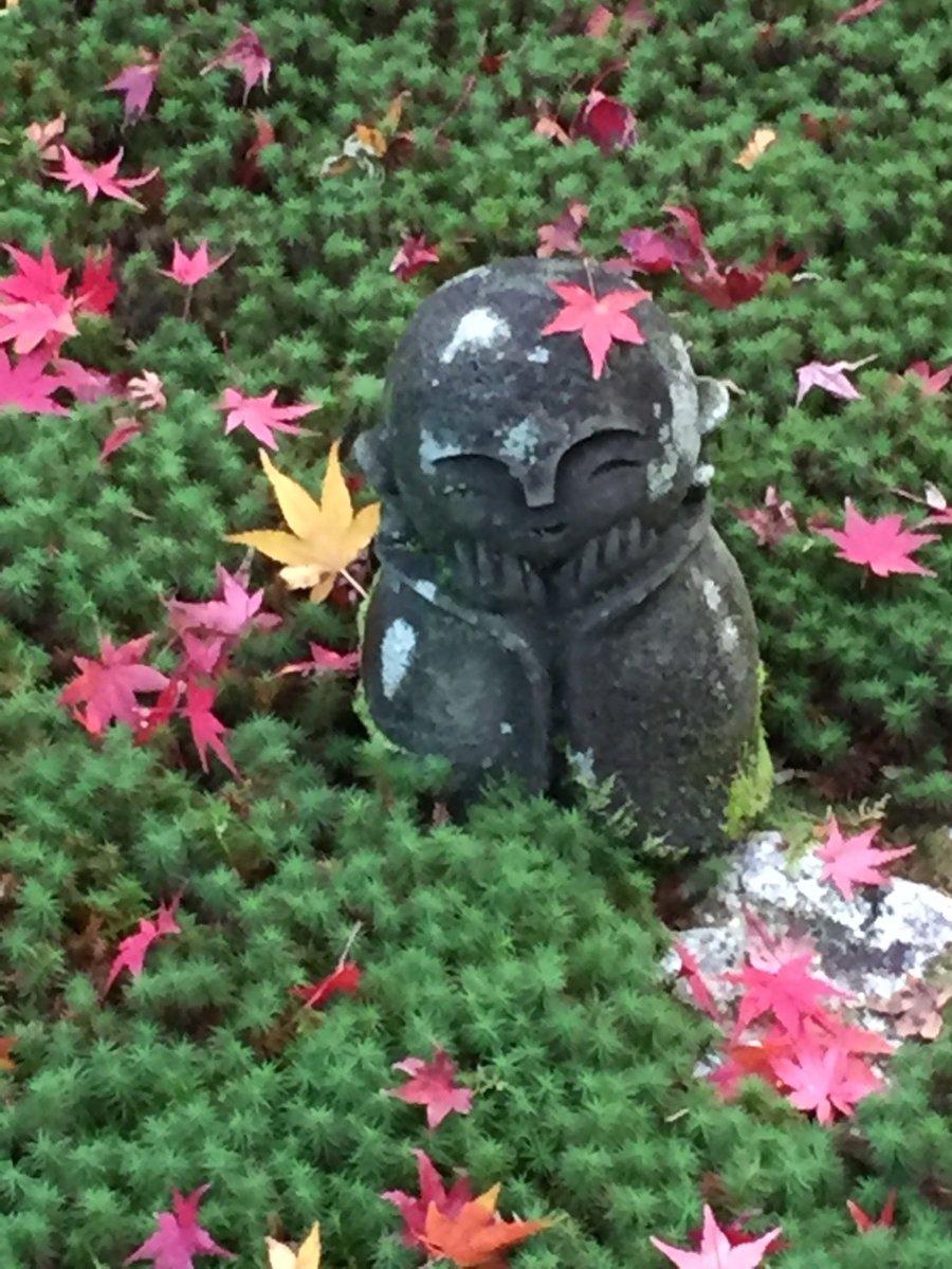 圓光寺の苔と散紅葉 2017年12月9日 撮影:MKタクシー