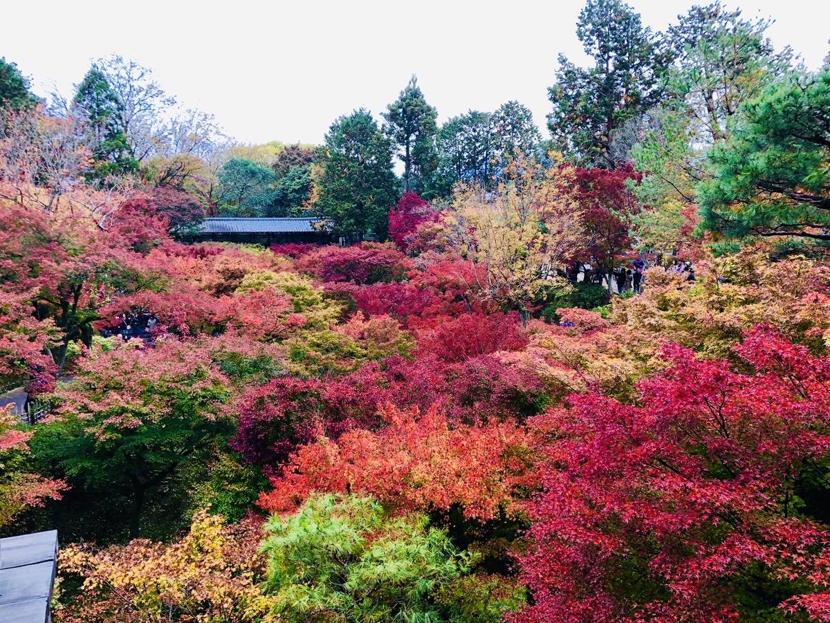 東福寺・通天橋からの紅葉 見頃 2018年11月19日 撮影:MKタクシー
