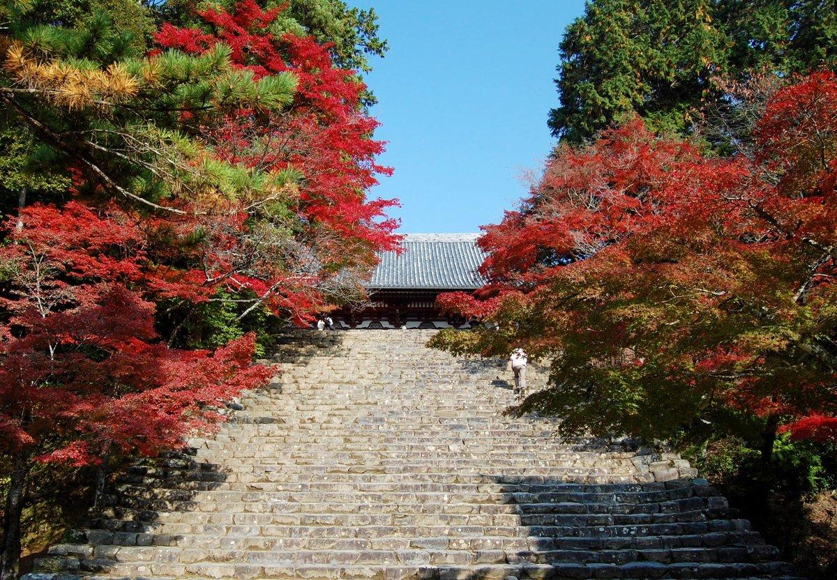 神護寺の紅葉 見頃 2007年11月25日 撮影:MKタクシー