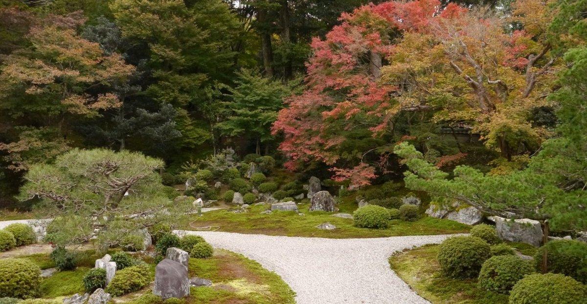 曼殊院・枯山水庭園の紅葉 色づきはじめ 2013年11月17日 撮影:MKタクシー